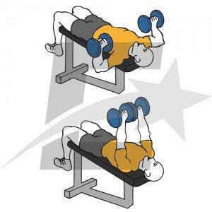 Rutina básica para pectorales. Musculación y culturismo.