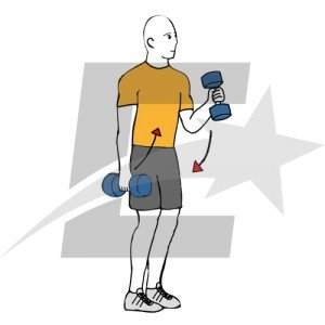 Mejora tu bíceps (II). Musculación y culturismo.