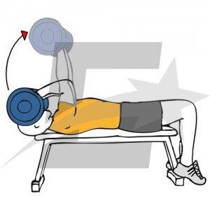 C mo mejorar tu tr ceps musculaci n y culturismo for En y frances ejercicios