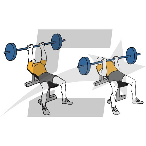 Press de banca con agarre supino. Musculación y culturismo.
